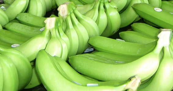 Organic Banana Packaging and Marketing