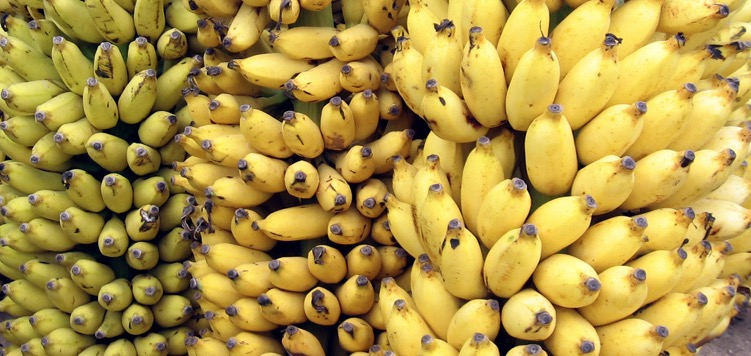 Pick your fruit right – Conventional vs Organic vs Genetically modified!
