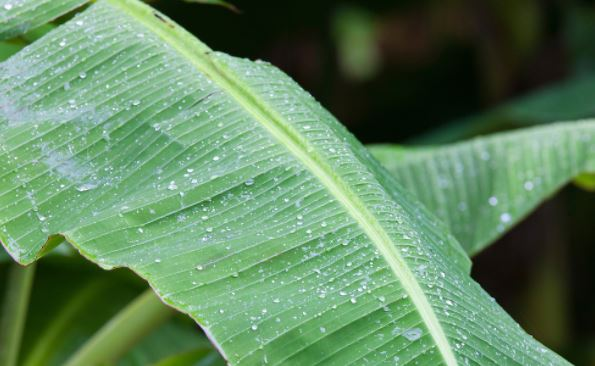 leaf rain